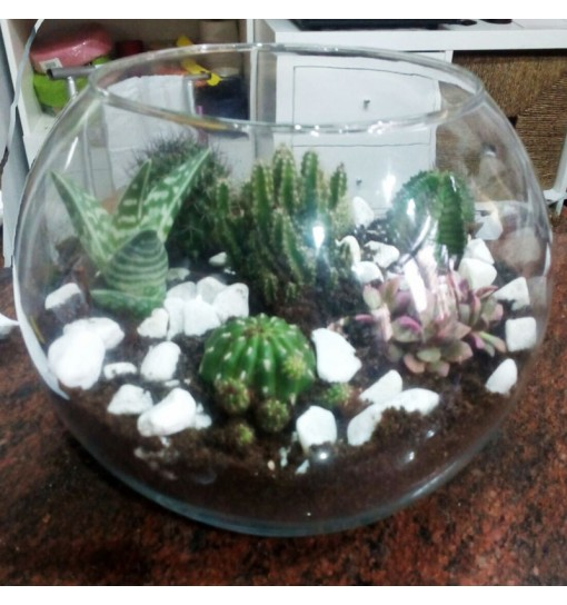 Terrario-cactus